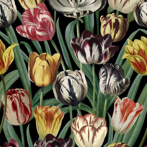 product image for Tulipa